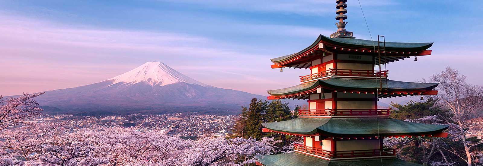 fuji hanami sakura